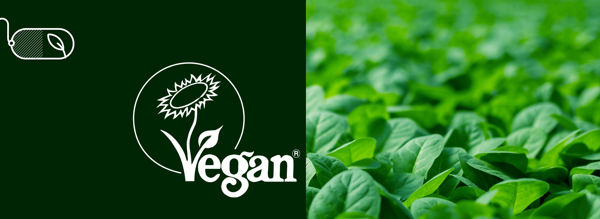 What K-CAPS® New Vegan Certification Means for Your Brand
