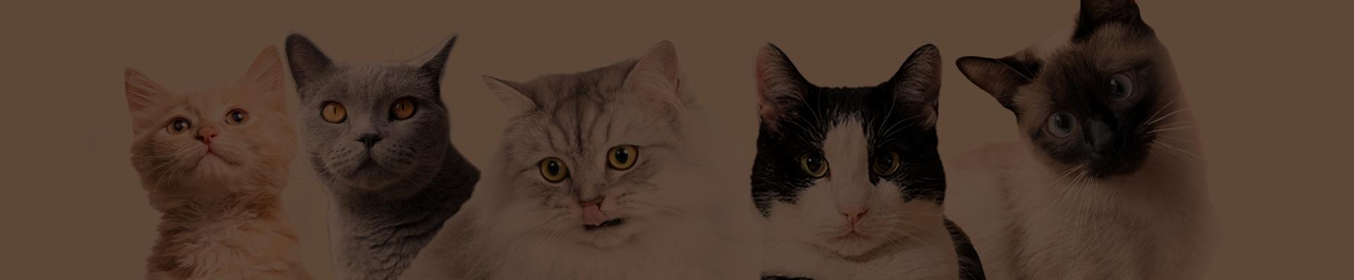palatability study cats